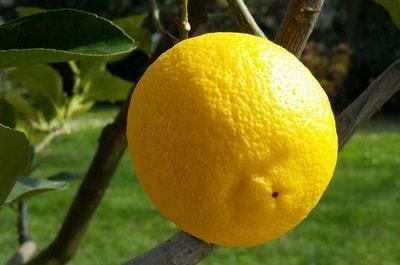 Aroma Limone